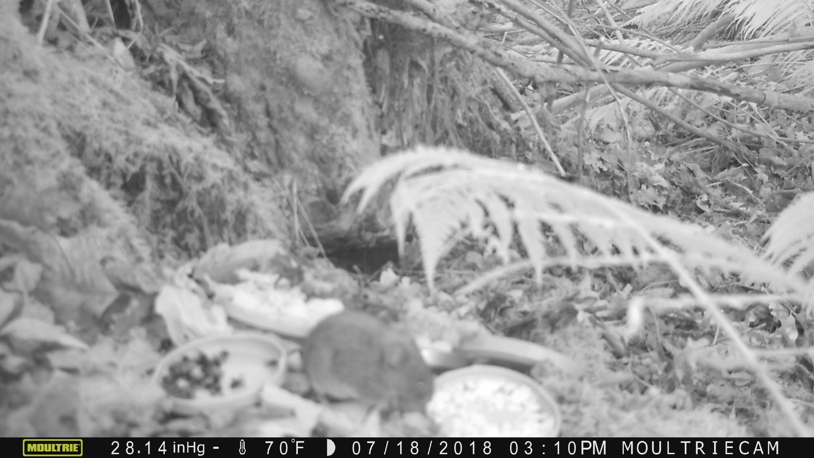 Was Essen Mäuse Gerne was fressen mäuse am liebsten?