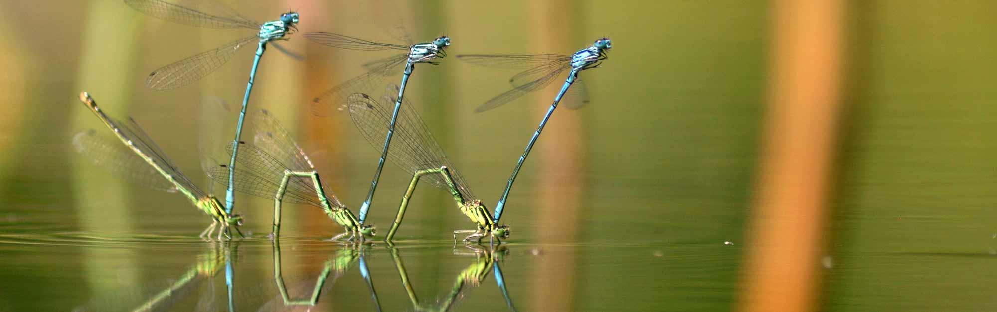 top_insekten.jpg